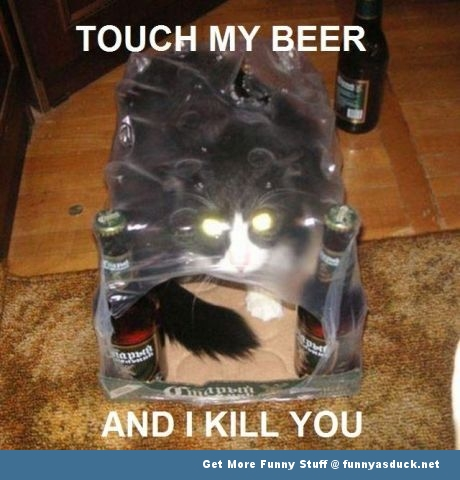 cat animal lolcat beer funny pics pictures pic picture image photo images photos lol