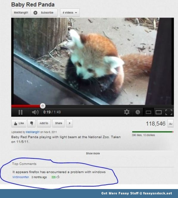 firefox you tube windows internet red panda animal funny pics pictures pic picture image photo images photos lol