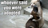 adopted dog kill cat animal funny pics pictures pic picture image photo images photos lol
