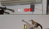 air con cat animal ac on off fright funny pics pictures pic picture image photo images photos lol