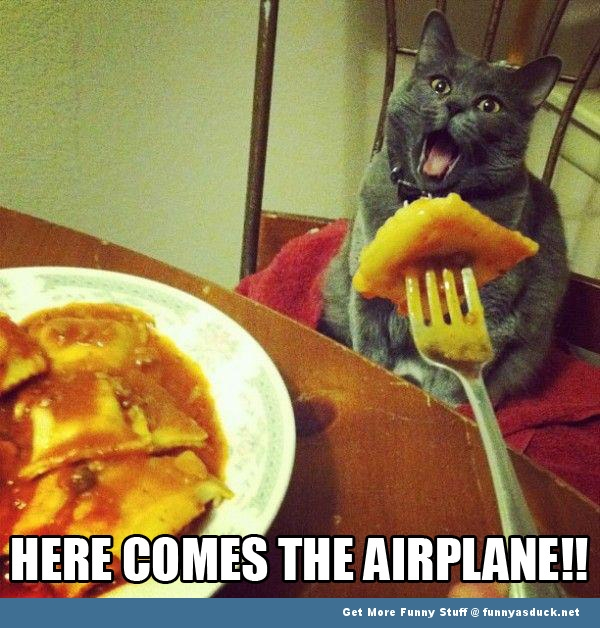 cat lolcat eating airplane animal funny pics pictures pic picture image photo images photos lol