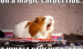 guinea pig animal magic carpet animal Aladdin funny pics pictures pic picture image photo images photos lol