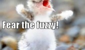 angry bird chick almighty fuzzy animal funny pics pictures pic picture image photo images photos lol