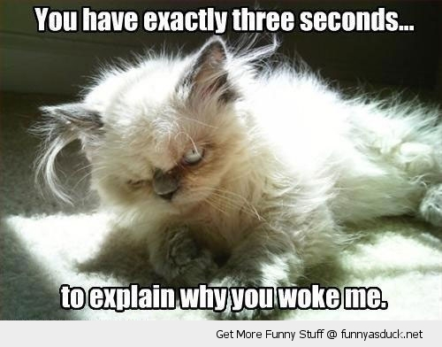 woke me up angry cat lolcat animal funny pics pictures pic picture image photo images photos lol