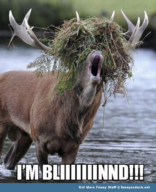 deer animal i'm blind help funny pics pictures pic picture image photo images photos lol
