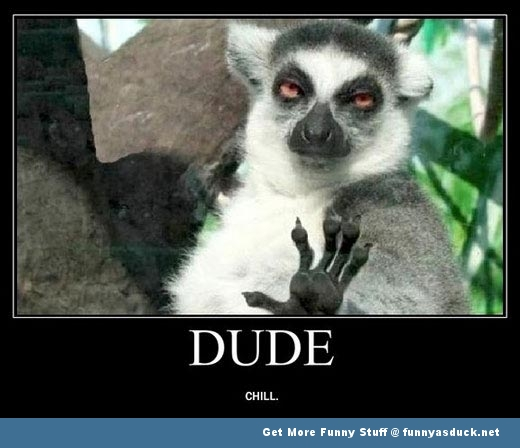 lemur chill out monkey aniaml dude funny pics pictures pic picture image photo images photos lol