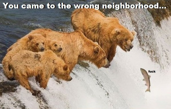 bears salmon fish river fuck funny pics pictures pic picture image photo images photos lol