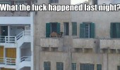 camel last night balcony animal funny pics pictures pic picture image photo images photos lol