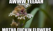 aww yeah flowers hamster mouse rodent animal funny pics pictures pic picture image photo images photos lol