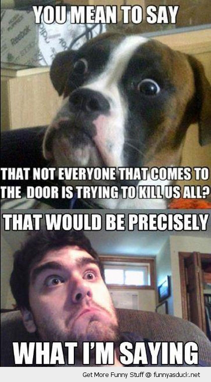 baffled boxer dog door kill us animal funny pics pictures pic picture image photo images photos lol