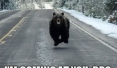 coming at you bro me come bear animal funny pics pictures pic picture image photo images photos lol
