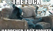 the fuck last night bear animal sofa couch funny pics pictures pic picture image photo images photos lol