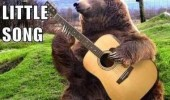 singing bear guy i ate animal guitar funny pics pictures pic picture image photo images photos lol