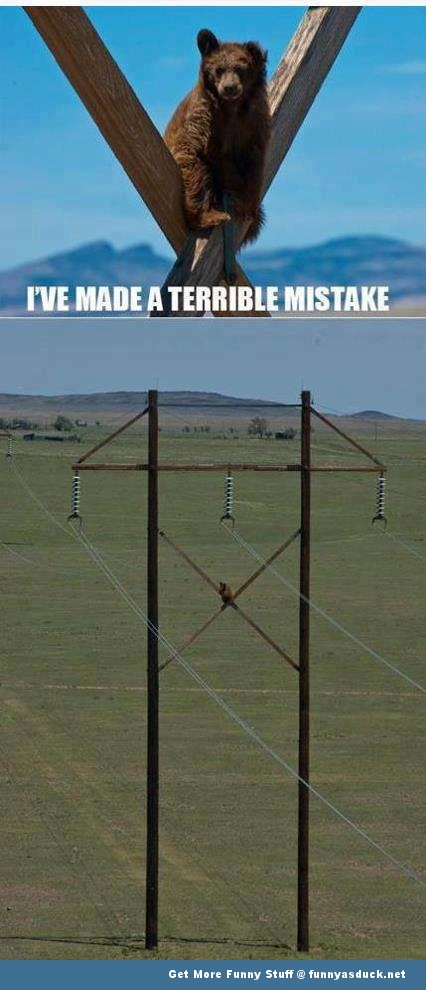 bear animal telegraph pole terrible mistake funny pics pictures pic picture image photo images photos lol