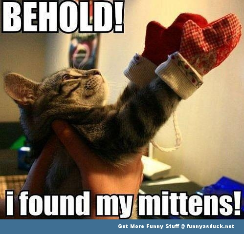 cat kitten lolcat behold mittens funny pics pictures pic picture image photo images photos lol