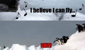 penguin fly killer whale shit eat funny pics pictures pic picture image photo images photos lol