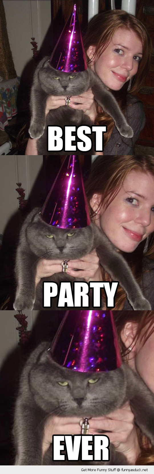 best party ever cat lolcat animal bored funny pics pictures pic picture image photo images photos lol