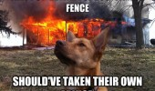 beware of the dog house fire animal funny pics pictures pic picture image photo images photos lol