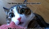 threw away bird present cat lolcat animal funny pics pictures pic picture image photo images photos lol