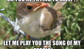 bird animal song of my people funny pics pictures pic picture image photo images photos lol