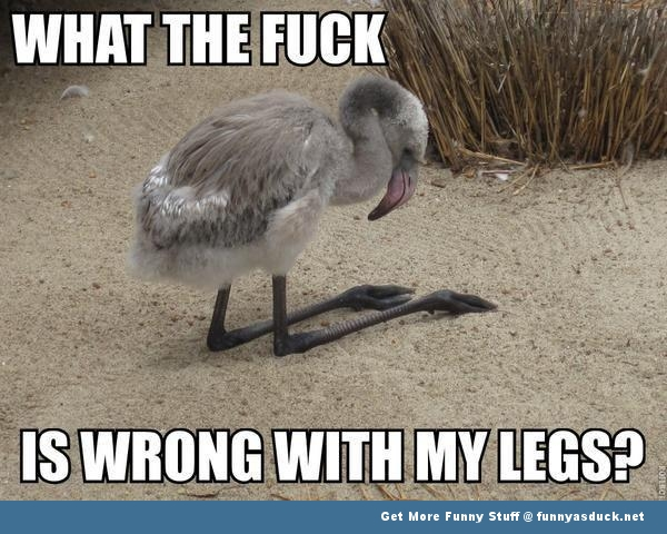 bird wrong legs feet weird animal funny pics pictures pic picture image photo images photos lol