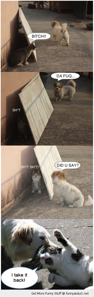 bitch cat dog fight animal funny pics pictures pic picture image photo images photos lol