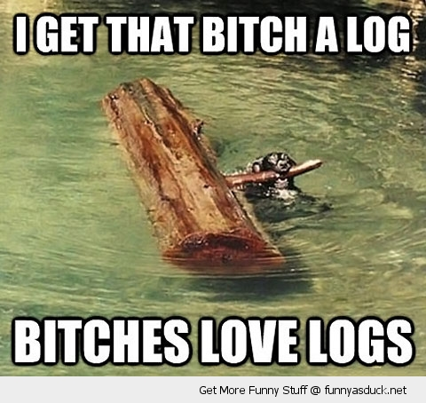 bitches love logs dog water swimming animal funny pics pictures pic picture image photo images photos lol