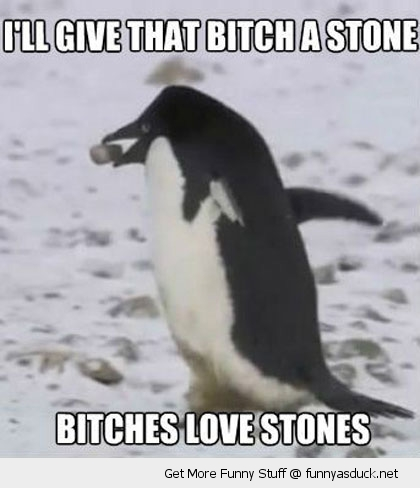 bitch a stone penguin bird animal funny pics pictures pic picture image photo images photos lol