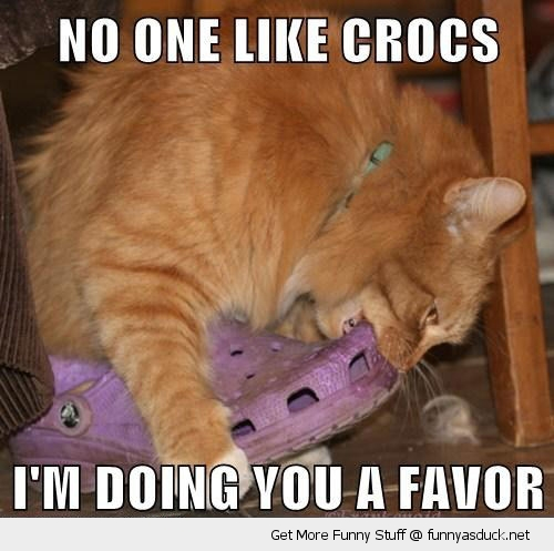 cat eating biting crocs shoes animal funny pics pictures pic picture image photo images photos lol