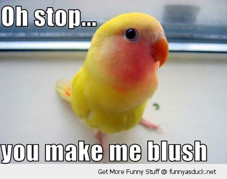 stop blush bird animal budgie red face funny pics pictures pic picture image photo images photos lol