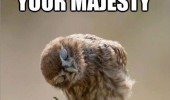 owl bowing majesty bird animal funny pics pictures pic picture image photo images photos lol