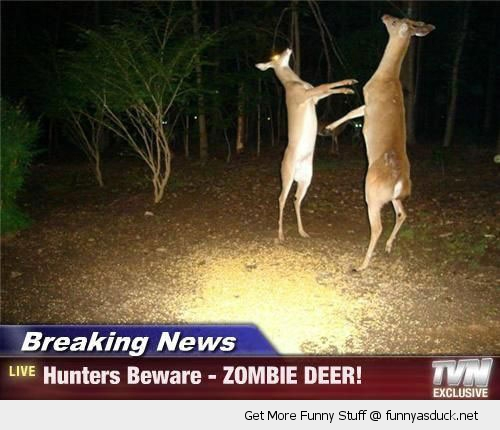 news reprt braking deer animal zombie hunters funny pics pictures pic picture image photo images photos lol