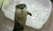 but its cold otter animal ice funny pics pictures pic picture image photo images photos lol