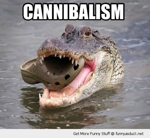cannibalism crocodile croc shoe animal funny pics pictures pic picture image photo images photos lol