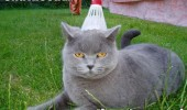 badminton shuttle cock meme cat animal lolcat funny pics pictures pic picture image photo images photos lol