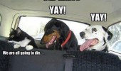 cat dogs animal car rides die funny pics pictures pic picture image photo images photos lol