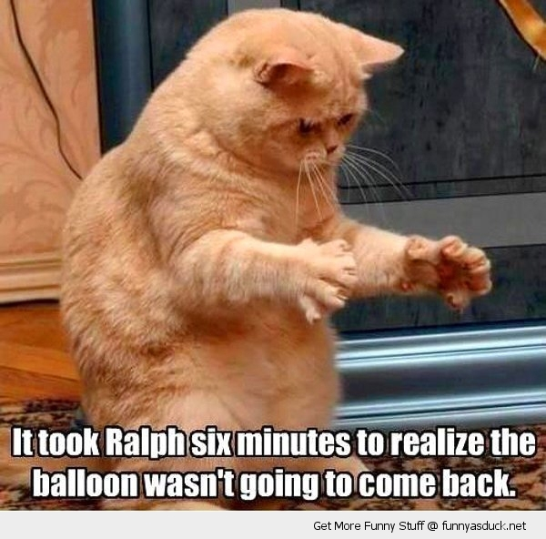 ralph cat lolcat balloon animal funny pics pictures pic picture image photo images photos lol