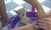 cat bath wet washed filthy humans funny pics pictures pic picture image photo images photos lol