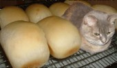 became a loaf cat animal lolcat funny pics pictures pic picture image photo images photos lol