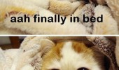 finally in bed cat lolcat animal funny pics pictures pic picture image photo images photos lol