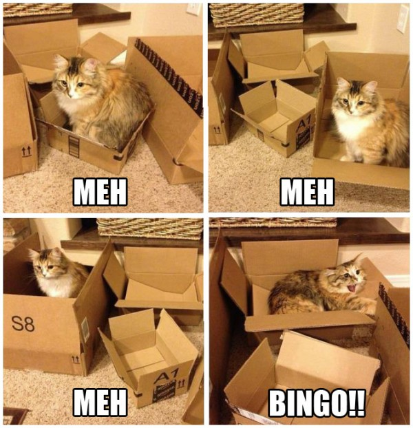 meh bingo cat lolcat animal boxes funny pics pictures pic picture image photo images photos lol
