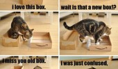cat box love story lolcat funny pics pictures pic picture image photo images photos lol