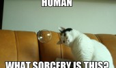 cat lolcat animal bubble sorcery funny pics pictures pic picture image photo images photos lol