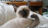 cat lolcat animal guns funny pics pictures pic picture image photo images photos lol