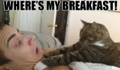 wheres my breakfast cat chocking man animal funny pics pictures pic picture image photo images photos lol