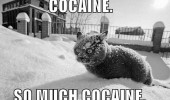 cat cocaine snow lolcat animal funny pics pictures pic picture image photo images photos lol