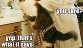 cat catnip cooking lolcat funny pics pictures pic picture image photo images photos lol