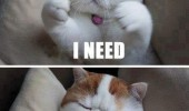 need hugs cat lolcat animal funny pics pictures pic picture image photo images photos lol