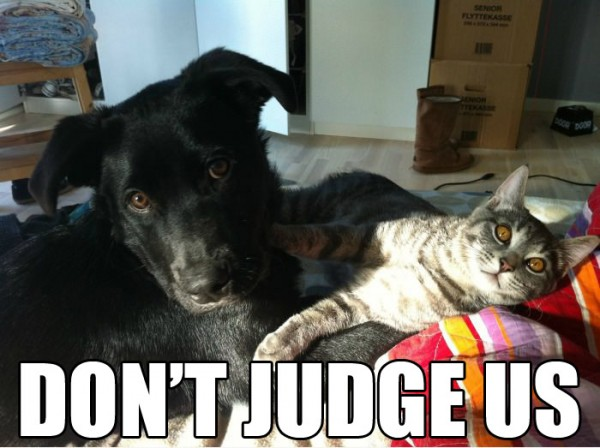 dont judge us cat dog animal lolcat funny pics pictures pic picture image photo images photos lol