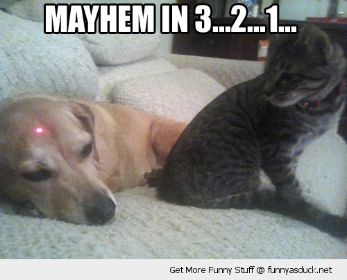 mayhem red dot cat lolcat dog animal funny pics pictures pic picture image photo images photos lol